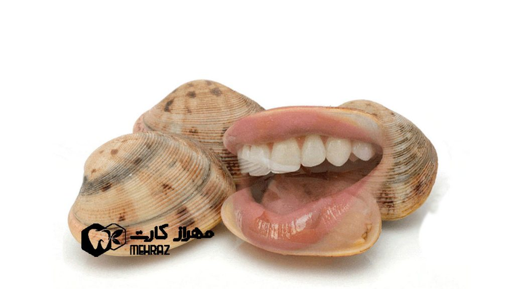 صدف-دریایی